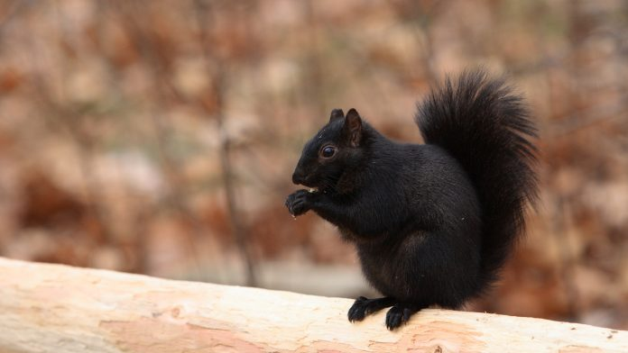 squirrel-696x392
